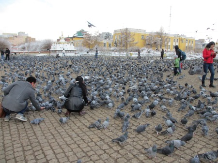 Pigeons. A lot of them ::: Holuby. Vela holubov