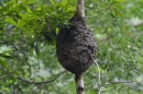 Vasps' Nest