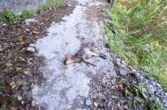 Deer.. Dead