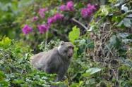 Monkey Visitor