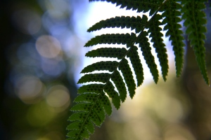 Nature - Australia