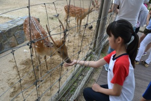 Bambi feeding